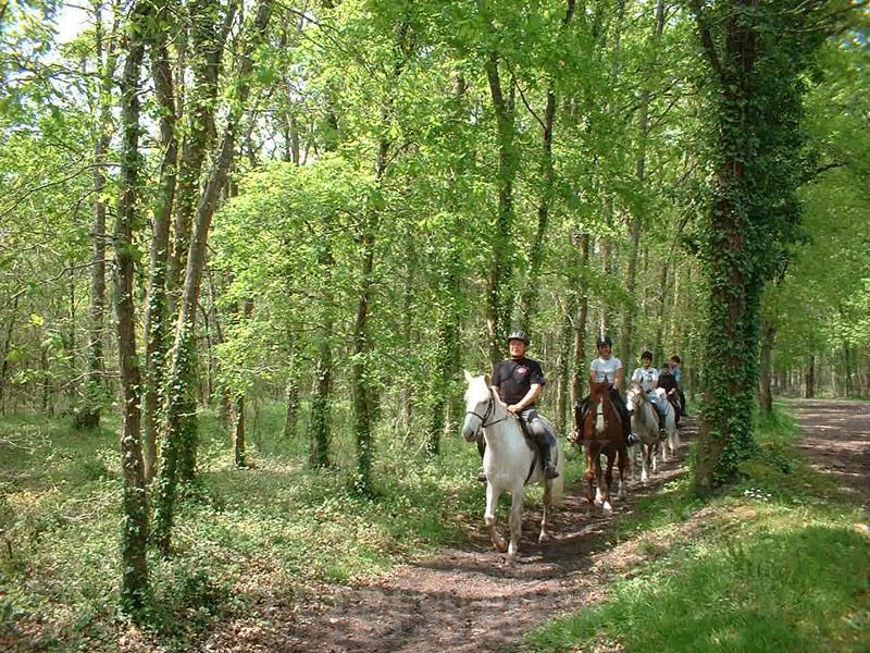 Balade à cheval le long de l'Eyre en Gironde