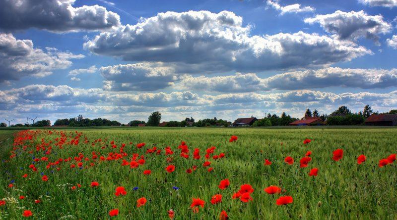 Vue d'un champ bordé par des fleurs